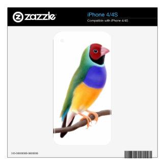 Piel colorida de Zazzle del pinzón de Gouldian iPhone 4S Calcomanía