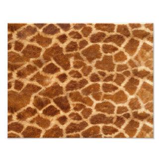 Piel de la jirafa fotografías
