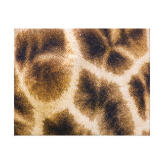 Piel de la jirafa (Giraffa Camelopardalis) Lona Estirada Galerías