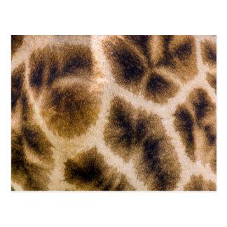 Piel de la jirafa (Giraffa Camelopardalis) Tarjetas Postales