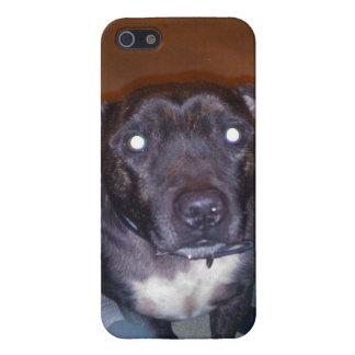 Piel de Staffy iPhone 5 Protectores