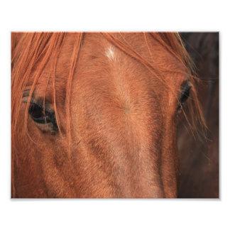 Piel del caballo fotografía