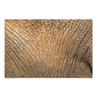 Piel del elefante fotografías