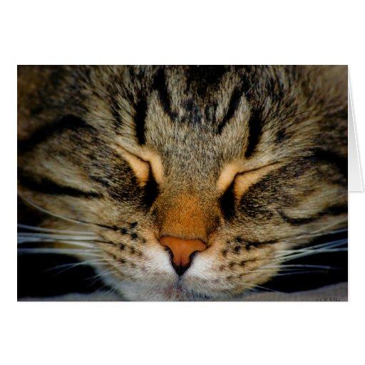 Piel del gato del gatito del maullido del coon de  tarjetón