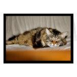 Piel del gato del gatito del maullido del coon de  felicitaciones