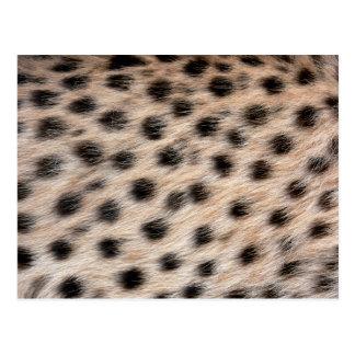 piel del guepardo o plantilla manchada negro de la tarjetas postales