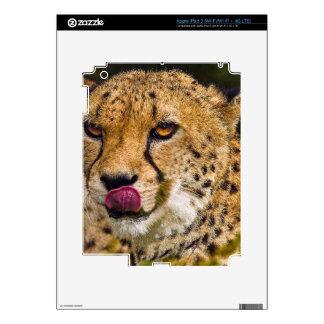 Piel del iPad 3 del guepardo iPad 3 Pegatinas Skins