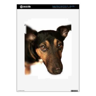 Piel del iPad 3 del perro de Brown Pegatinas Skins Para iPad 3