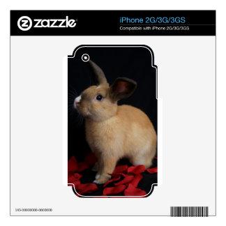 Piel del iphone 3G/3GS del conejo de conejito de M iPhone 3GS Skins