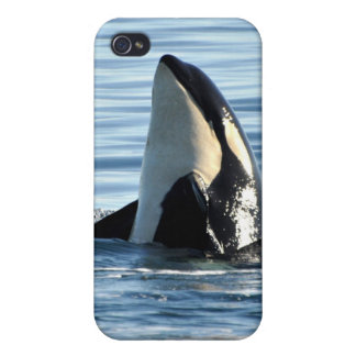 Piel del iPhone 4 de la orca iPhone 4 Cárcasas