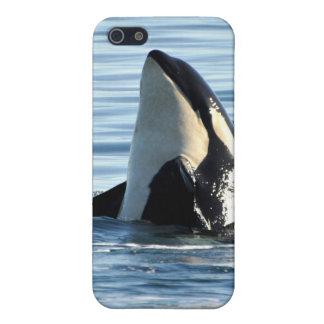 Piel del iPhone 4 de la orca iPhone 5 Carcasas