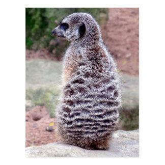 piel del meerkat postal
