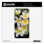 Piel floral del teléfono del Plumeria iPhone 4 Calcomanías