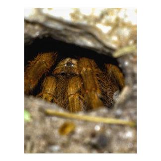 Piel-Lejos del Tarantula Plantilla De Membrete