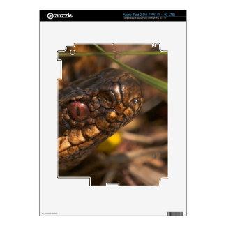 Piel principal del iPad 3 de las serpientes Pegatina Skin Para iPad 3