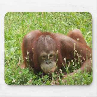 Piel y búsqueda Mousepad del orangután