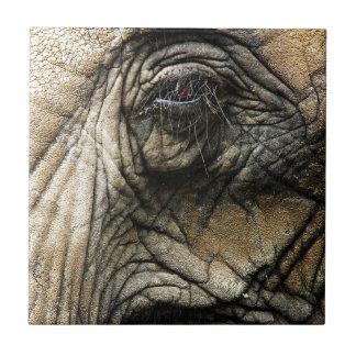 Piel y ojo arrugados del elefante azulejo cuadrado pequeño
