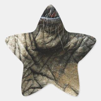Piel y ojo arrugados del elefante pegatina en forma de estrella