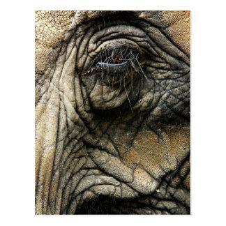 Piel y ojo arrugados del elefante postal