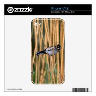 Pieles del teléfono del empavesado de lámina calcomanías para iPhone 4