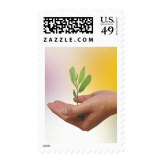 Piense el verde envio