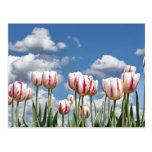 ¡Piense la primavera! Tarjeta Postal