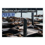 Pier 39 Sea Lions in San Francisco Card