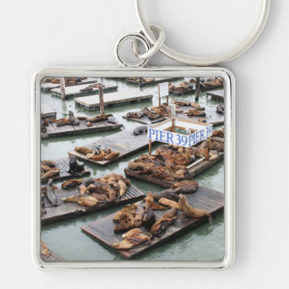Pier 39 Sea Lions in San Francisco Keychains