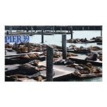 Pier 39 Sea Lions in San Francisco Photo Print