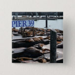 Pier 39 Sea Lions in San Francisco Pinback Button