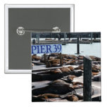 Pier 39 Sea Lions in San Francisco Pinback Button