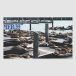 Pier 39 Sea Lions in San Francisco Rectangular Sticker