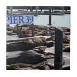 Pier 39 Sea Lions in San Francisco Tile