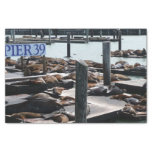 Pier 39 Sea Lions in San Francisco Tissue Paper