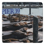 Pier 39 Sea Lions in San Francisco Trivet