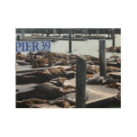 Pier 39 Sea Lions in San Francisco Wood Poster