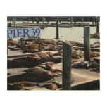 Pier 39 Sea Lions in San Francisco Wood Wall Art