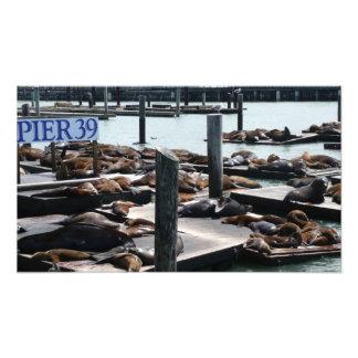 Pier 39 Sea Lions Photo Print