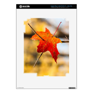 pierced in autumn decal for iPad 3