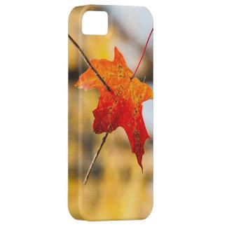 pierced in autumn iPhone SE/5/5s case