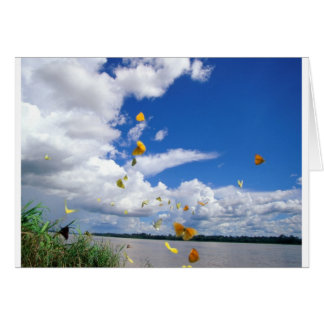 pierides el río Amazonas de las mariposas Tarjeta De Felicitación