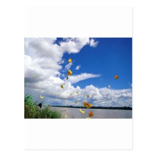 pierides el río Amazonas de las mariposas Tarjeta Postal