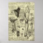 Pierna humana Leonardo da Vinci de la laringe de l Posters