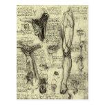Pierna humana Leonardo da Vinci de la laringe de l Tarjetas Postales