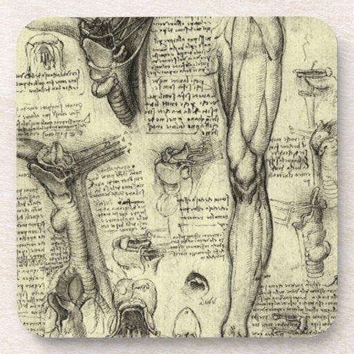 Pierna humana Leonardo da Vinci de la laringe de Posavaso