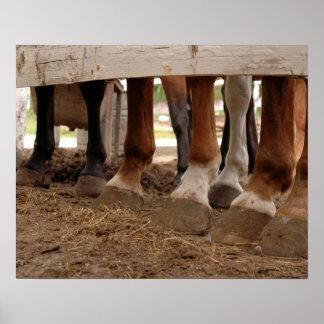 Piernas del caballo póster