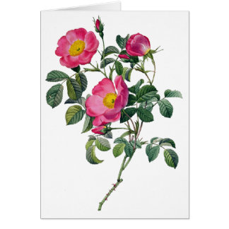 Pierre Joseph Redoute Roses Card