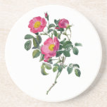 Pierre Joseph Redoute Roses Drink Coaster