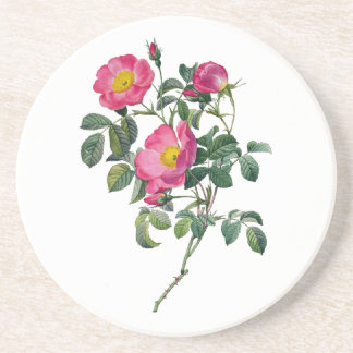 Pierre Joseph Redoute Roses Sandstone Coaster