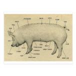 piezas del cerdo tarjeta postal